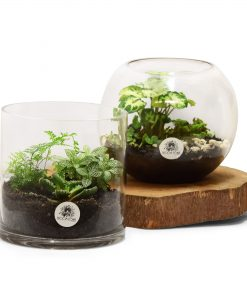 Plants & Terrariums